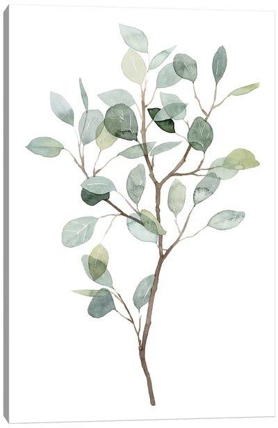 Seaglass Eucalyptus I Canvas Art Print