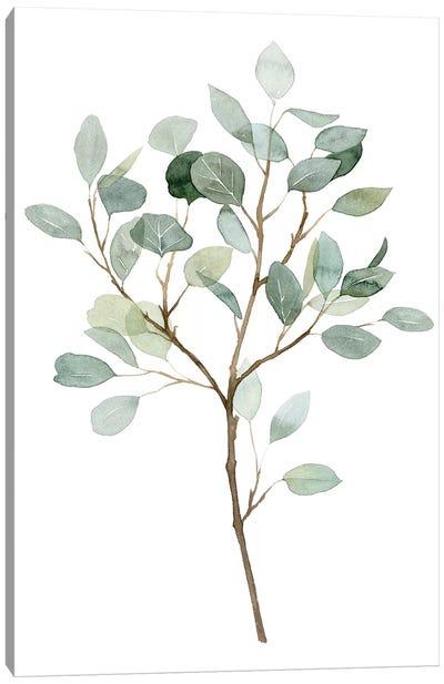 Seaglass Eucalyptus II Canvas Art Print