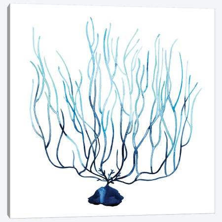 Fan de la Mer I Canvas Print #POP199} by Grace Popp Canvas Wall Art