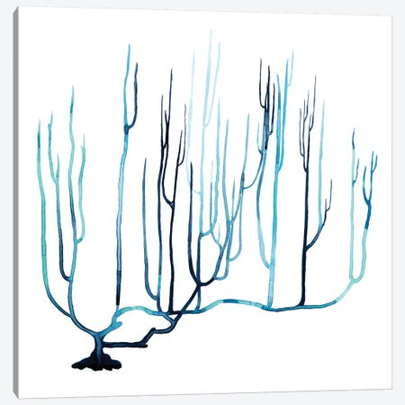 Fan de la Mer IV Canvas Print #POP202} by Grace Popp Canvas Art