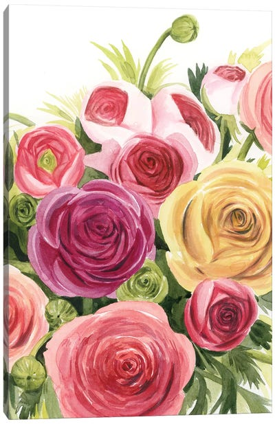 Ranunculus Study II Canvas Art Print
