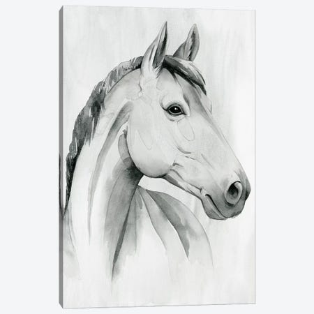 Silver Gelding I Canvas Print #POP2031} by Grace Popp Canvas Art