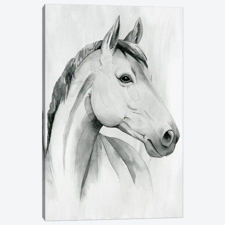 Silver Gelding I Canvas Print #POP2031} by Grace Popp Canvas Art