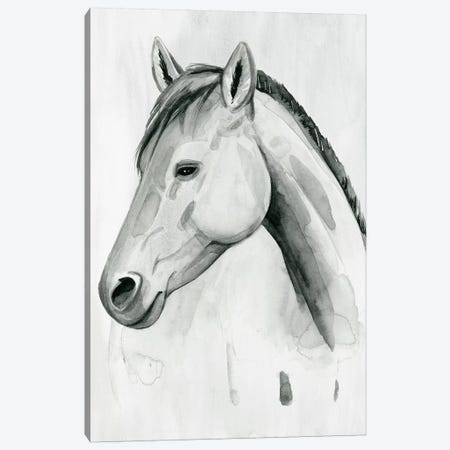 Silver Gelding II Canvas Print #POP2032} by Grace Popp Canvas Art
