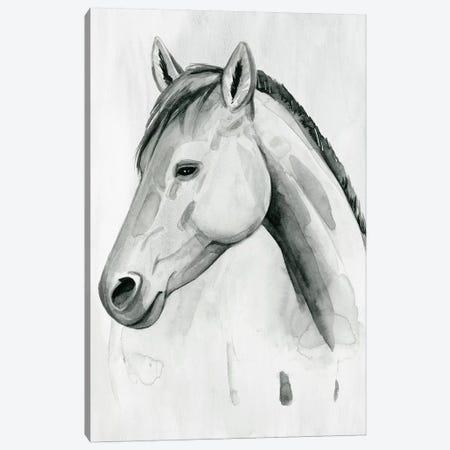 Silver Gelding II Canvas Print #POP2032} by Grace Popp Canvas Art
