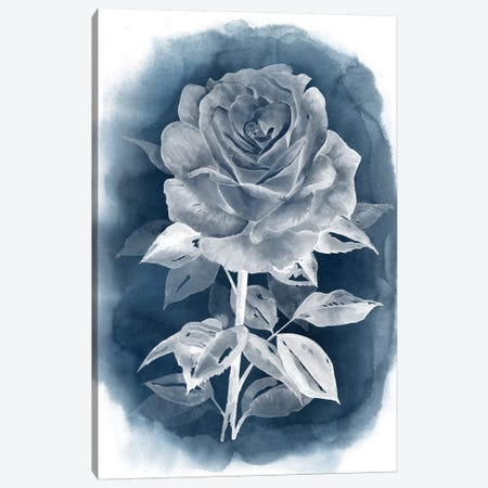 Ghost Rose III Canvas Print #POP211} by Grace Popp Art Print
