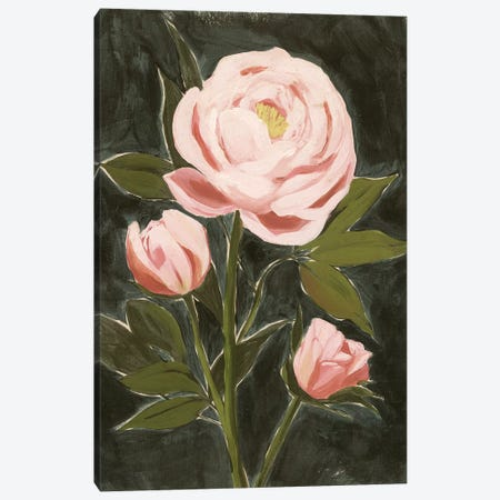 Vintage Peonies II Canvas Print #POP2132} by Grace Popp Canvas Art Print