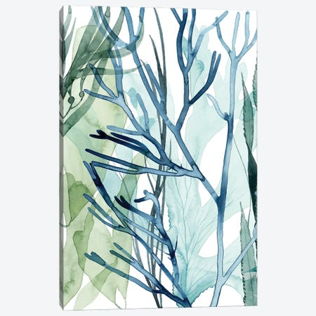 Sea Leaves II Canvas Print #POP2207} by Grace Popp Canvas Art