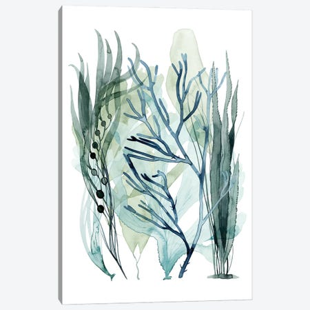 Sea Leaves III Canvas Print #POP2208} by Grace Popp Canvas Print