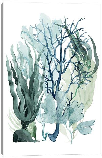 Sea Leaves IV Canvas Art Print