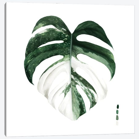 Variegated Monstera I Canvas Print #POP2218} by Grace Popp Canvas Art