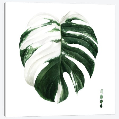 Variegated Monstera II Canvas Print #POP2219} by Grace Popp Canvas Artwork