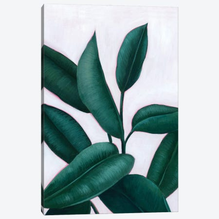 Verdant Ficus II Canvas Print #POP2221} by Grace Popp Canvas Art Print
