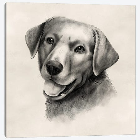 Charcoal Labrador II Canvas Print #POP2254} by Grace Popp Canvas Art Print