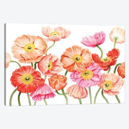 Bright Poppies III Canvas Print #POP2274} by Grace Popp Canvas Art Print