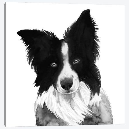 Border Collie I Canvas Print #POP2339} by Grace Popp Art Print