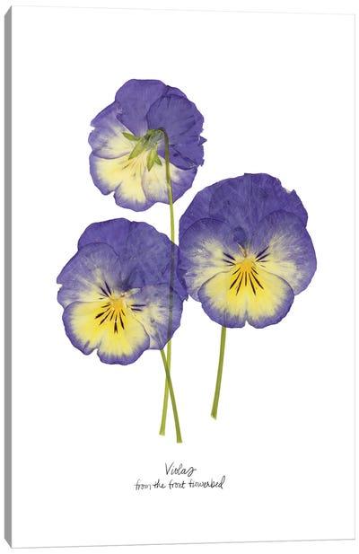 Pressed Violas I Canvas Art Print