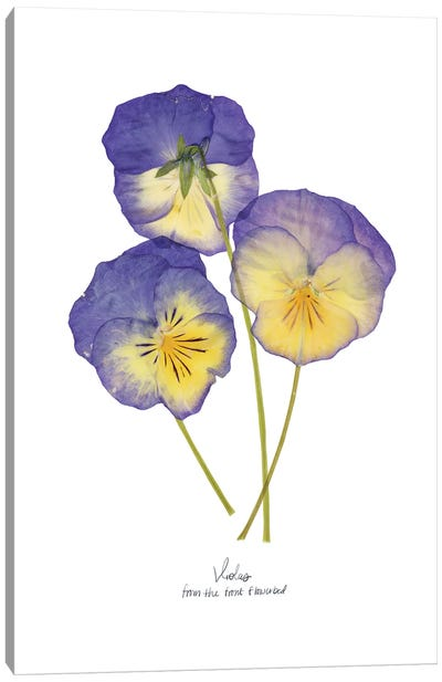 Pressed Violas II Canvas Art Print