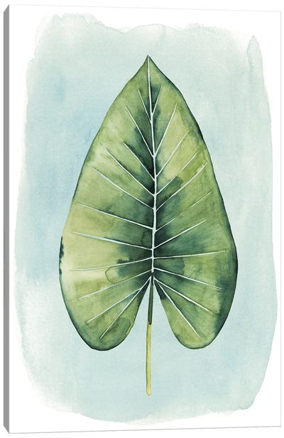 Paradise Palm Leaves III Canvas Art Print