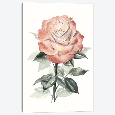 Beholden Rose I Canvas Print #POP26} by Grace Popp Canvas Art