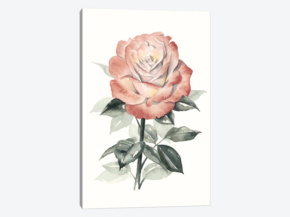 Beholden Rose I by Grace Popp 1-piece Canvas Wall Art