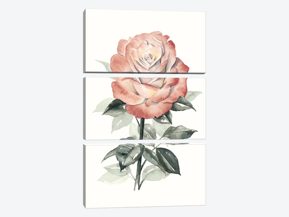 Beholden Rose I by Grace Popp 3-piece Canvas Artwork