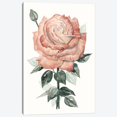 Beholden Rose II Canvas Print #POP27} by Grace Popp Canvas Artwork