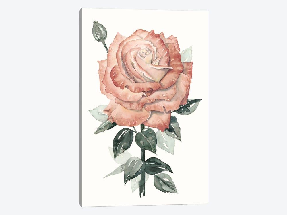 Beholden Rose II by Grace Popp 1-piece Canvas Art Print