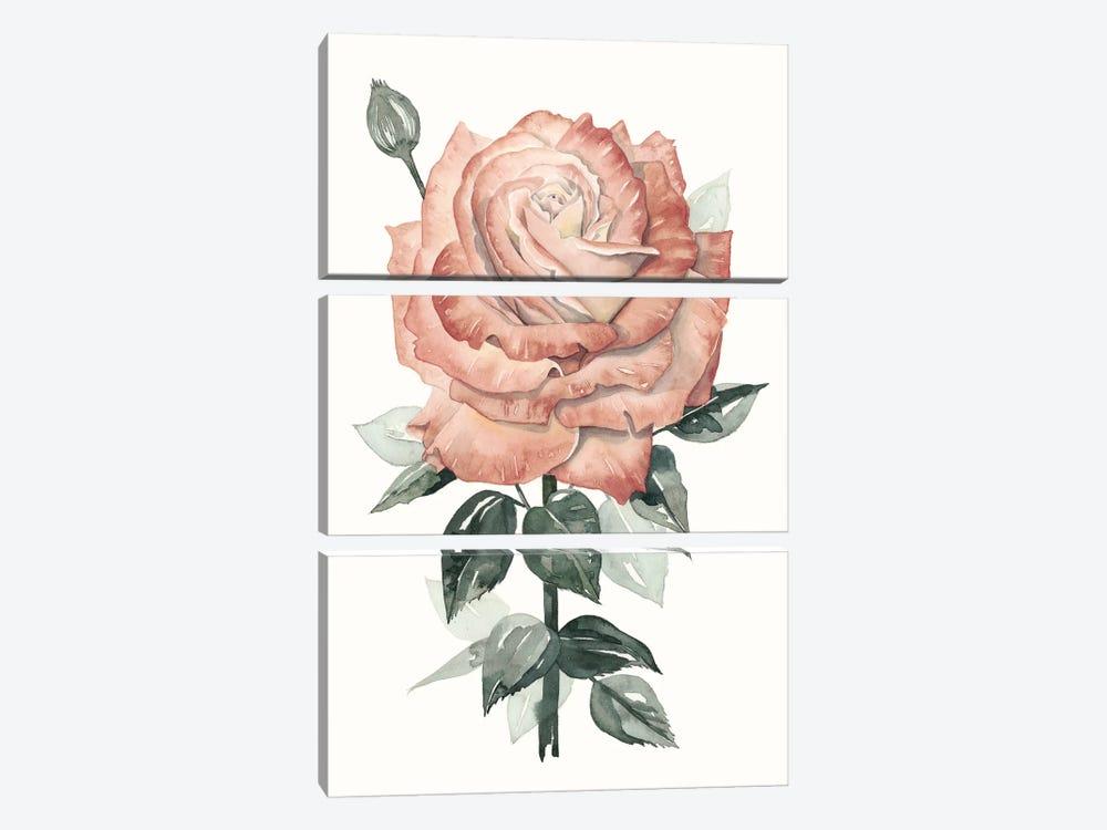 Beholden Rose II by Grace Popp 3-piece Canvas Art Print