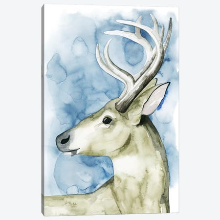 Wandering Stag I Canvas Print #POP284} by Grace Popp Canvas Print