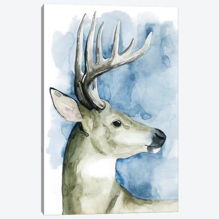 Wandering Stag II Canvas Print #POP285} by Grace Popp Canvas Print