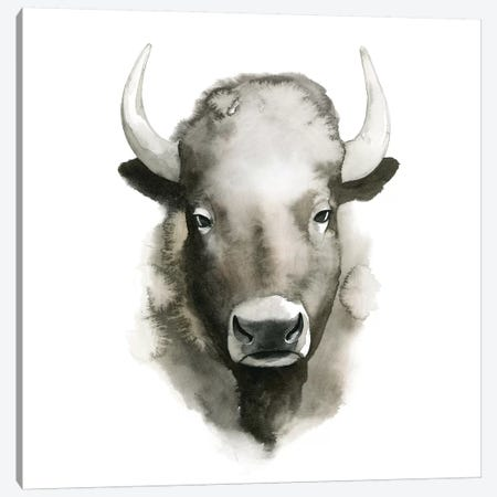 Watercolor Buffalo Canvas Print #POP287} by Grace Popp Canvas Art Print