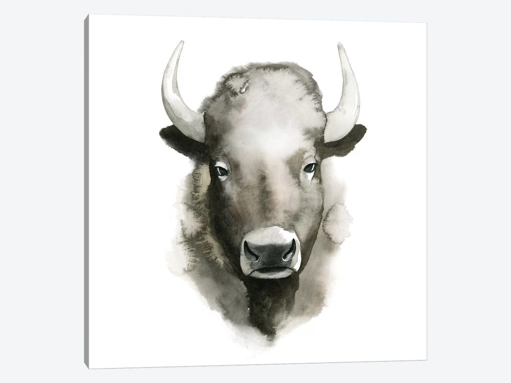 Watercolor Buffalo by Grace Popp 1-piece Canvas Art
