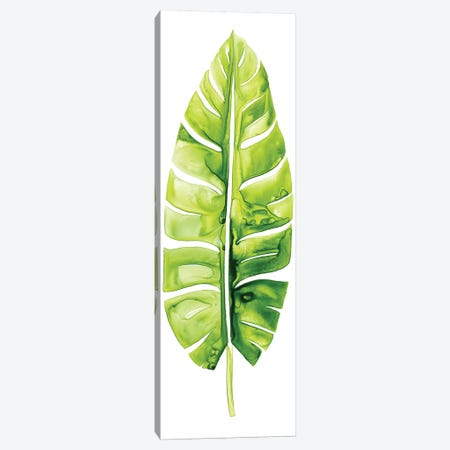 Banana Leaf Study II Canvas Print #POP307} by Grace Popp Canvas Artwork