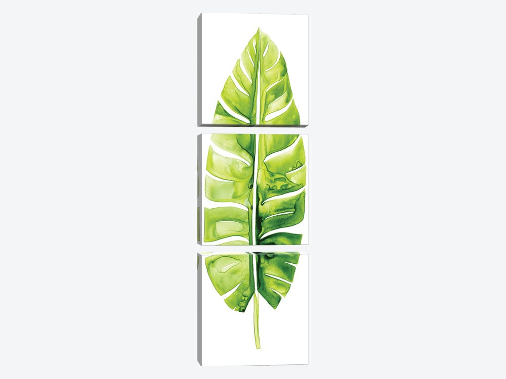 Banana Leaf Study II by Grace Popp 3-piece Canvas Print