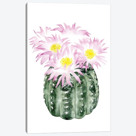 Cactus Bloom I Canvas Print #POP32} by Grace Popp Canvas Wall Art