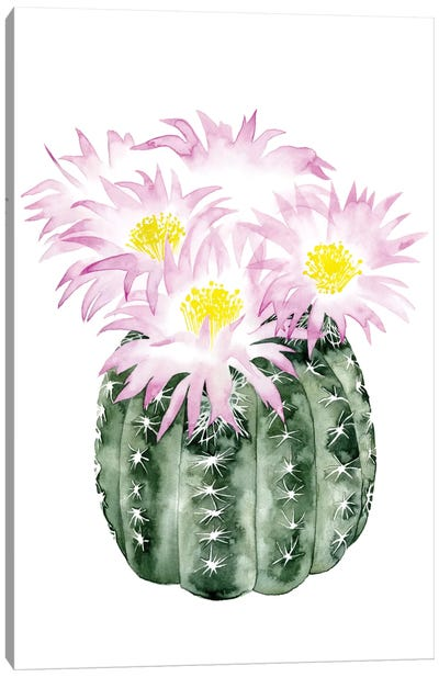 Cactus Bloom I Canvas Art Print