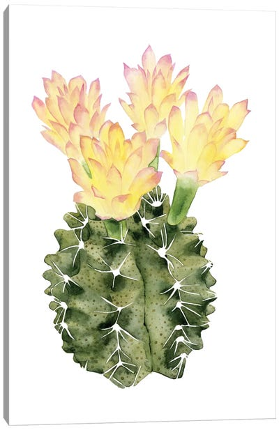 Cactus Bloom II Canvas Art Print