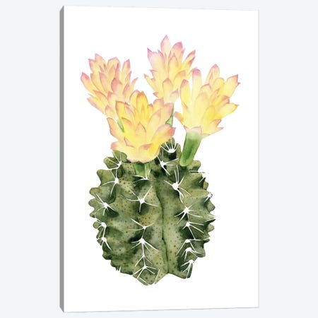 Cactus Bloom II Canvas Print #POP33} by Grace Popp Canvas Art