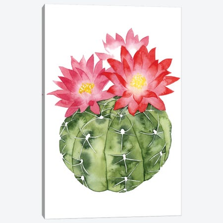 Cactus Bloom III Canvas Print #POP34} by Grace Popp Canvas Art Print