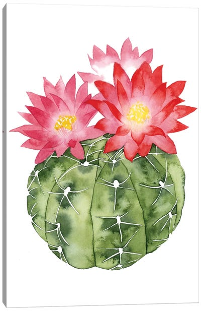 Cactus Bloom III Canvas Art Print