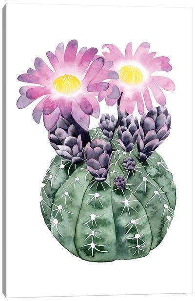 Cactus Bloom IV Canvas Print #POP35