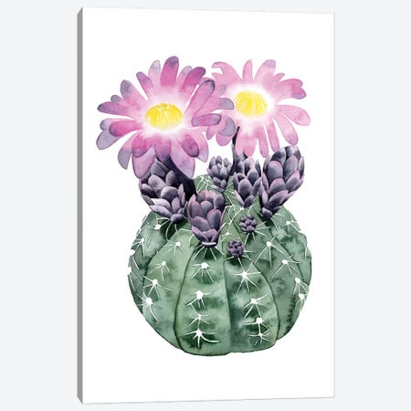 Cactus Bloom IV Canvas Print #POP35} by Grace Popp Art Print