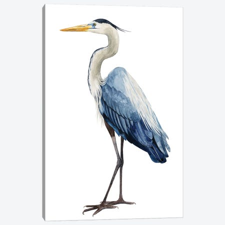 Seabird Heron I Canvas Print #POP370} by Grace Popp Canvas Art