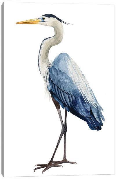 Seabird Heron I Canvas Art Print