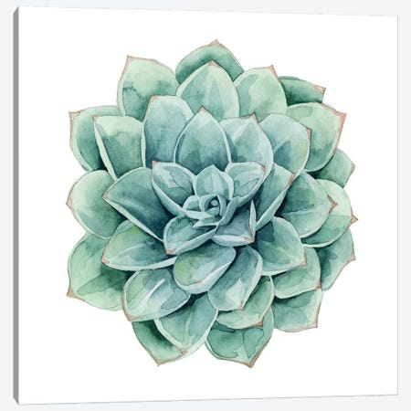 Succulent Swatches I Canvas Print #POP378} by Grace Popp Canvas Artwork