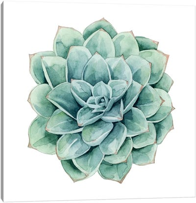 Succulent Swatches I Canvas Art Print
