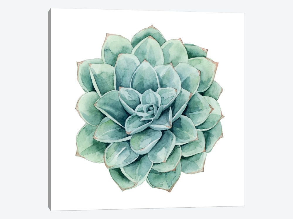 Succulent Swatches I by Grace Popp 1-piece Art Print