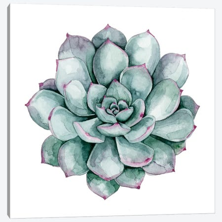 Succulent Swatches II Canvas Print #POP379} by Grace Popp Canvas Art