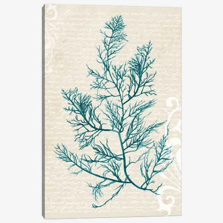 Teal Seaweed I Canvas Print #POP382} by Grace Popp Canvas Print
